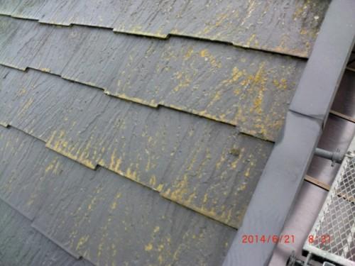 横浜市戸塚区:コケの付着した屋根