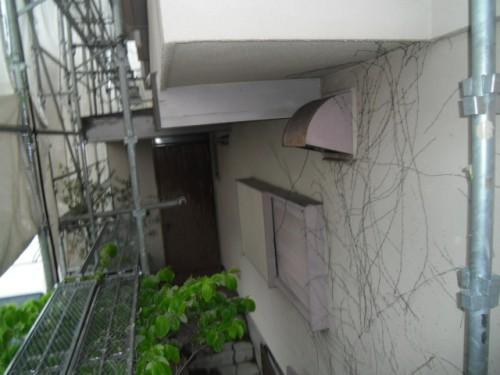 横浜市磯子区:ツタの這っている外壁