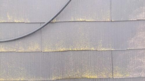町田市本町田:コケの付着した屋根2