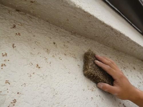 東京都大田区:外壁ツタの根除去