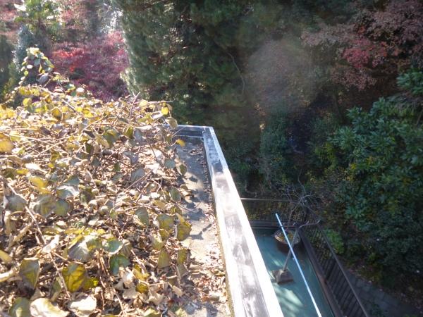 屋上に裏山の枯れ葉が散らばっています