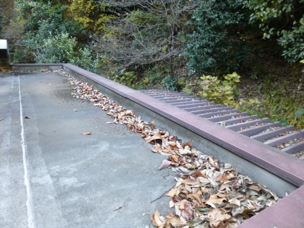 裏山から落ちてくる枯れ葉が積もっている屋上